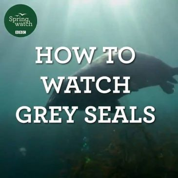 This year's #springwatch (and Chris Packhams isolation bird club) has been absolutely brilliant, just the best TV ever. There was a great bit last night on watching seals safely, a very important thing that we need to be mindful of here in North Cornwall